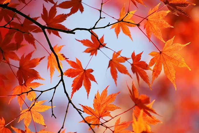 秋から冬にかけて肌が乾燥