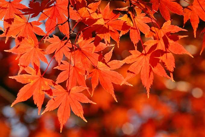 秋から冬にかけて気候